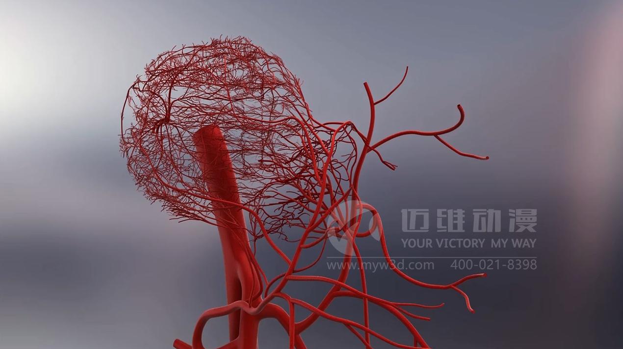 骨内血管分布